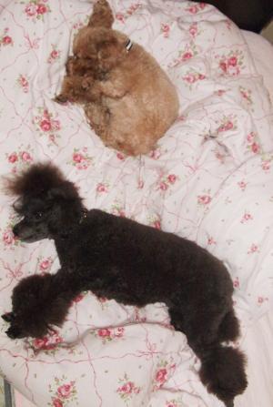 ベルとユメの 寝姿