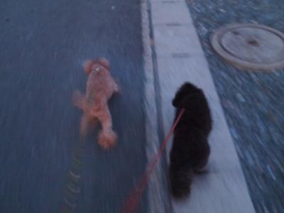 ベルユメ お散歩