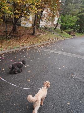 朝のお散歩だよ