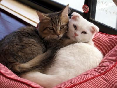 ねこコレ の猫さんたち