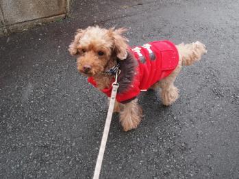 真っ赤なコート 似合う?