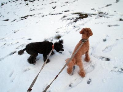 ゆんちゃん 今年初雪の上にいます