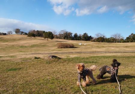 三崎公園だよ