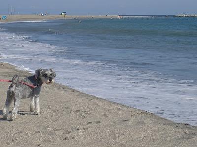根本海岸のキミちゃん