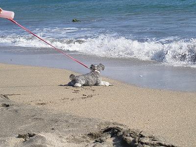 海辺で横たわるキミちゃん