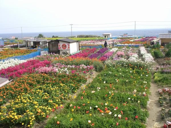 20110320 お花畑