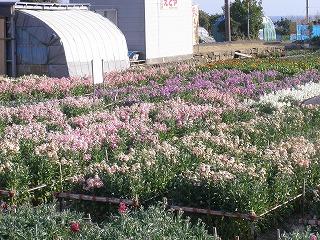 2012お花畑-1