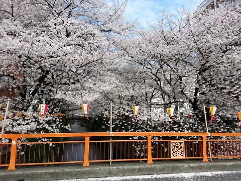 目黒川2013147