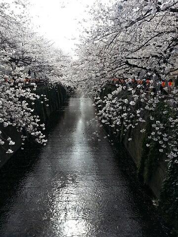 目黒川2013189