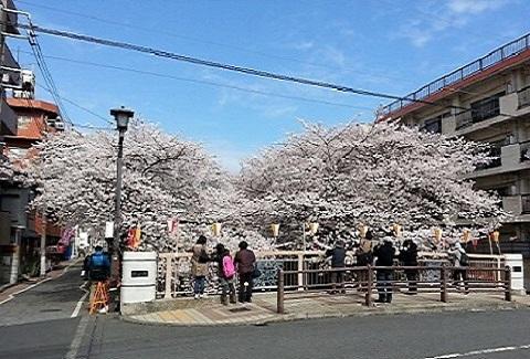 目黒川2013203