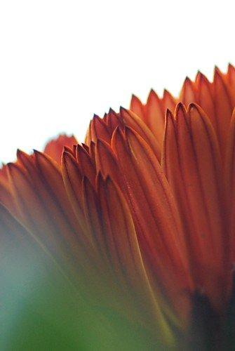カレンデュラコーヒークリーム20120126_02