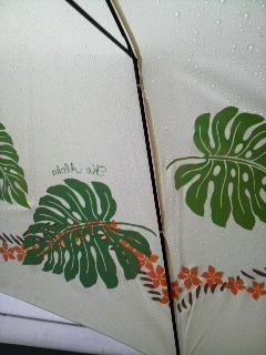 モンステラの傘