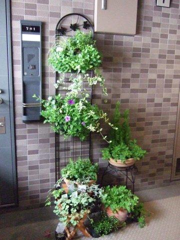 避難生活の植物
