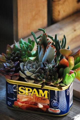 スパム缶ショートの寄せ植え20091120.jpg