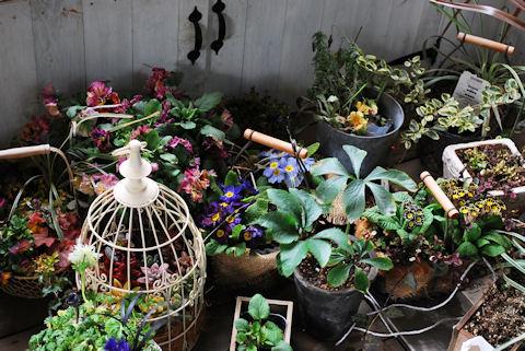 避難民のお花達20100226.jpg