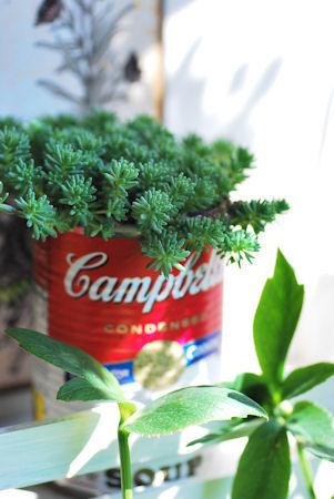 ヒスパニクムキャンベル缶20100327.jpg
