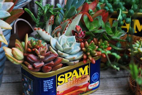 スパム缶ショートの寄せ植え20100406.jpg