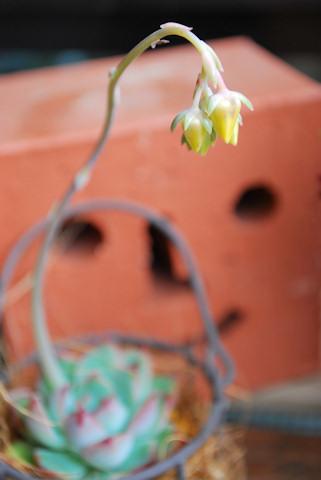 花うらら20100504.jpg