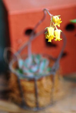 花うらら20100516.jpg