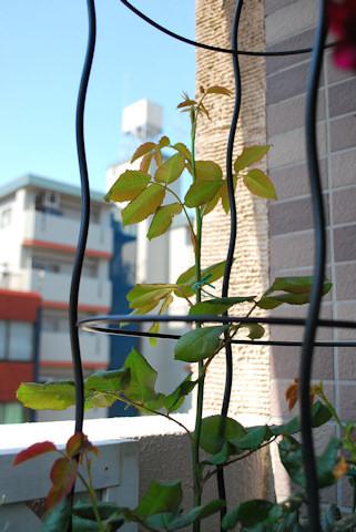 ナエマ20100610.jpg