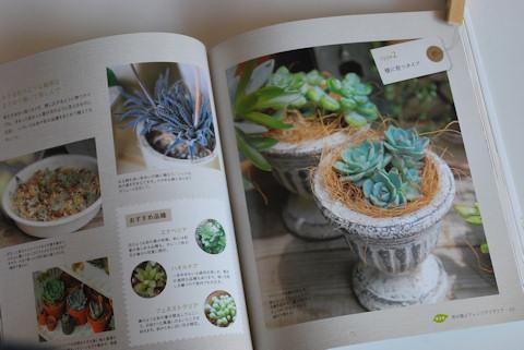 多肉植物アレンジBOOK20100906_02.jpg