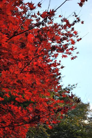 昭和の森会館20101120_05.jpg