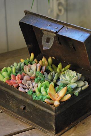 アイアン金庫の多肉の寄せ植え20101205_05.jpg