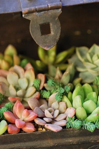 アイアン金庫の多肉の寄せ植え20101205.jpg