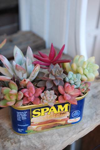 スパム缶ショートの寄せ植え20101211.jpg