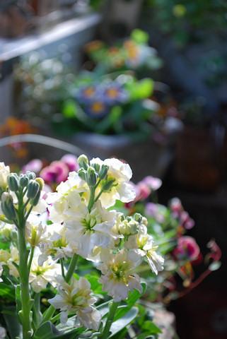 ストックビンテージマーブルホワイト20110102.jpg