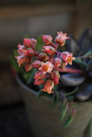 秋麗の寄せ植え20110105_02.jpg