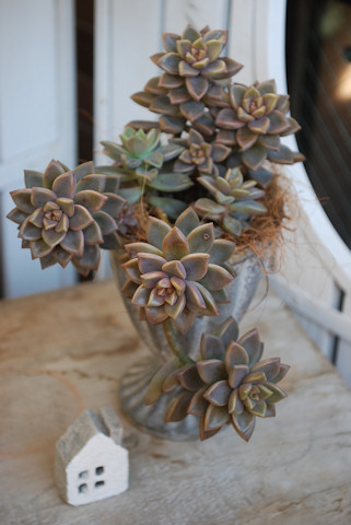 ブロンズ姫の寄せ植え20110105.jpg