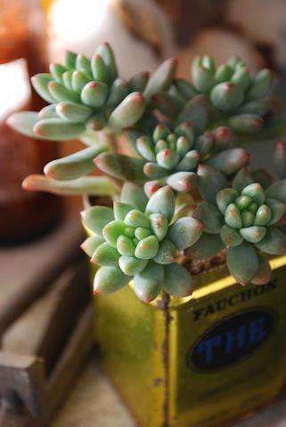 スノージェイド20110107.jpg