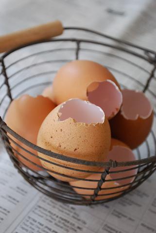 卵の殻20101231.jpg