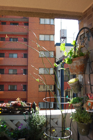 ナエマ20101211.jpg