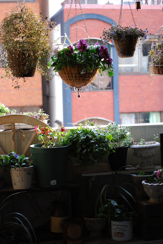 ベランダ南側20110219_03.jpg