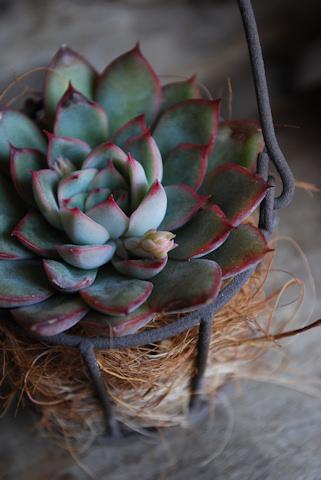 花うらら20110215.jpg