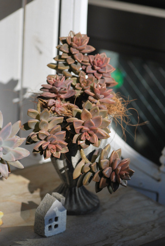 ブロンズ姫の寄せ植え20110310.jpg