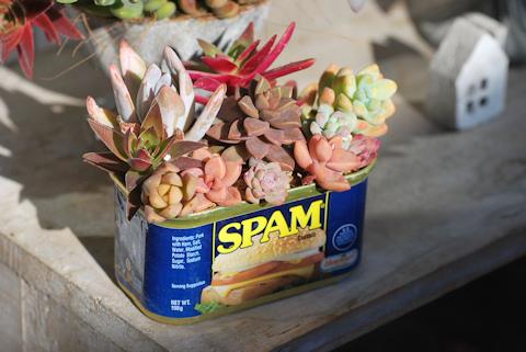 スパム缶ショートの寄せ植え20110310.jpg