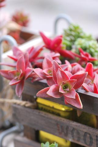 紅葉祭り20110306.jpg
