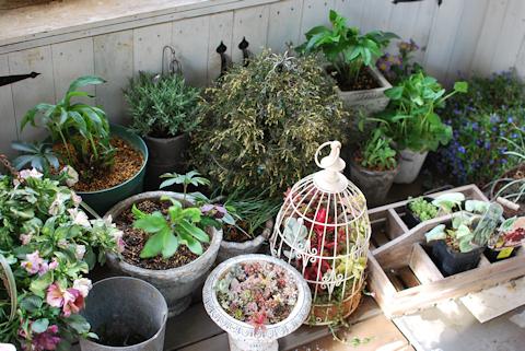 退避中の植物たち20110408.jpg