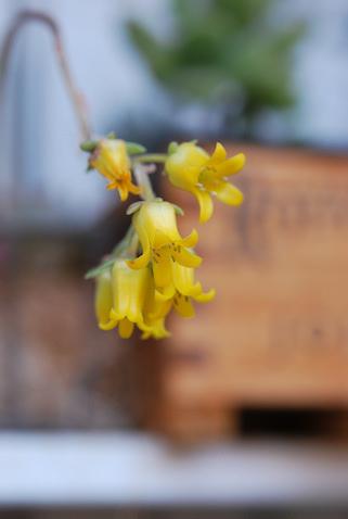 花うらら20110508_02.jpg