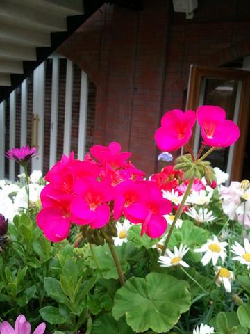 ガーデン20110527.jpg