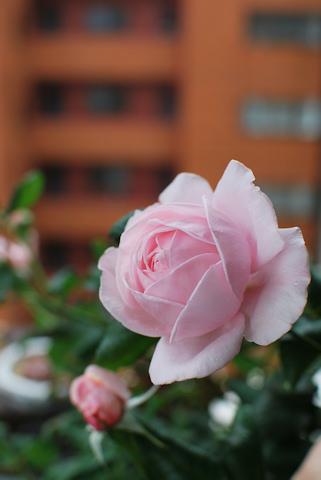 ナエマ20110528_05.jpg
