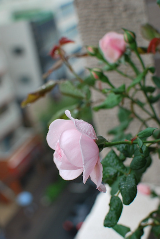 ナエマ20110528_02.jpg