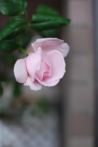 ナエマ20110530_03.jpg