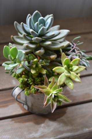 紫麗殿の寄せ植え20110714.jpg