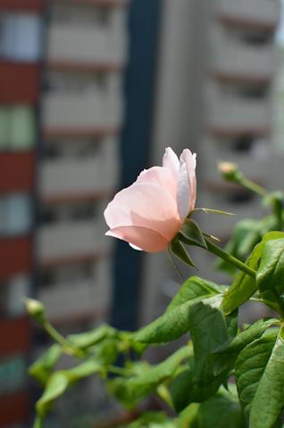 ナエマ20110813.jpg