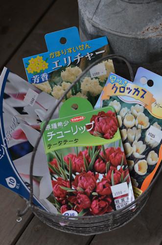 秋植え球根20110927.jpg