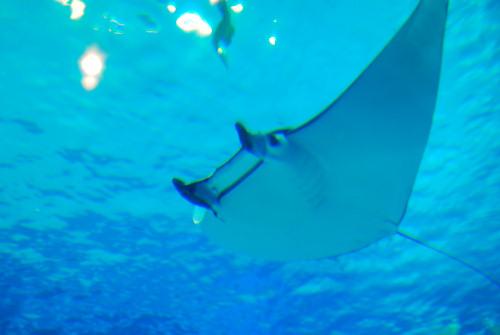 海遊館20110501_02.jpg